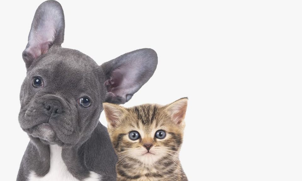 dog-cat-pet-friendly-cutout.jpg