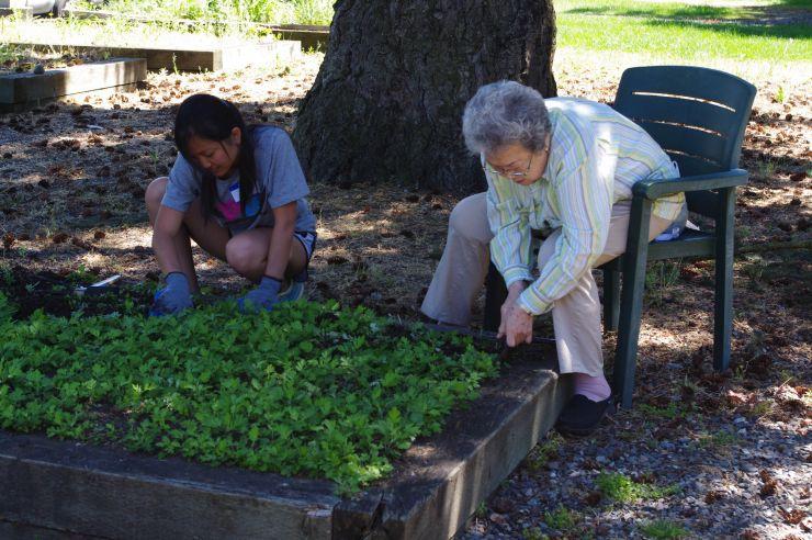 Lakewood Meadows planting